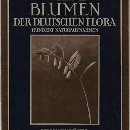 Купить Paul Dobe Wilde Blumen der Deutschen Flora