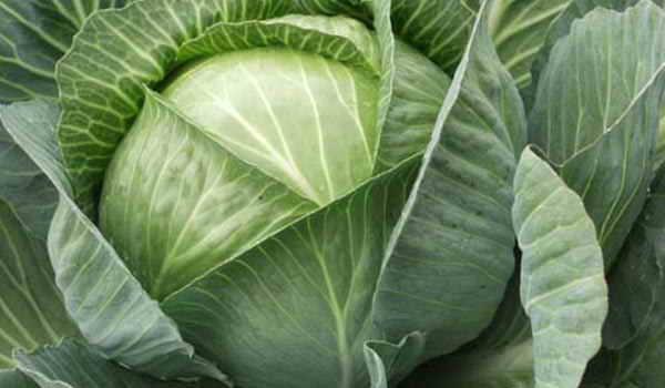 Польза капусты для здоровья человека