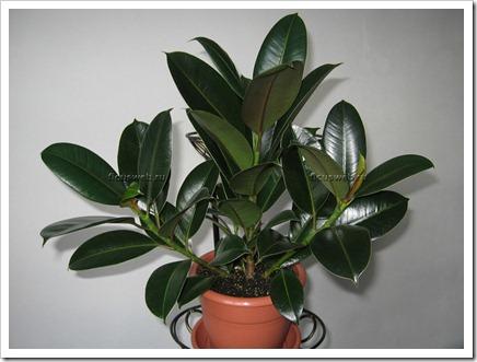 Растения, поглощающие вредные вещества