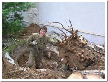 Удаление старого дерева