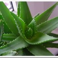 Описание видов растений
