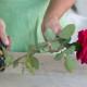 Как укоренить розы из букета зимой