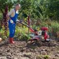 Как правильно выбрать мотоблок для огорода