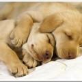 Как обеспечить комфорт собаке?