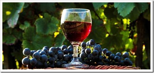 Виноград поднялся, началось брожение