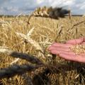Что такое семеноводство